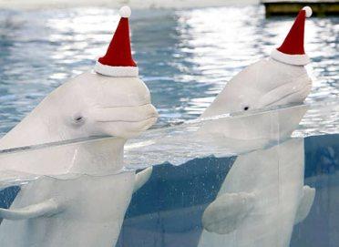 christmas-whale.jpg